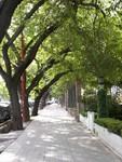 Les rues ombragées de Mendoza. Veel van de straten zijn beplant met bomen, zoals hier in Mendoza.