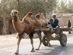 Les chameaux de la Bactriane sont toujours utilisés