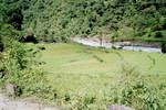 Rizières le long de la Marsyangdi Kola