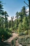 Juste avant Pisang, nous traversons une magnifique forêt de pins