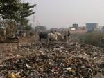 Un bord de route en Inde....