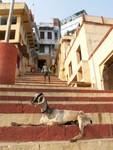 Chèvre se rechauffant sur les marches d'un ghat