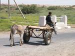 Jeune garçon turkmène au alentour de Merv